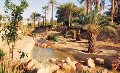 Zagora-oasis