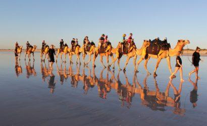 essaouira-camel-ride