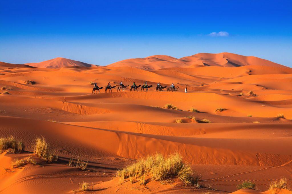 camel-merzouga
