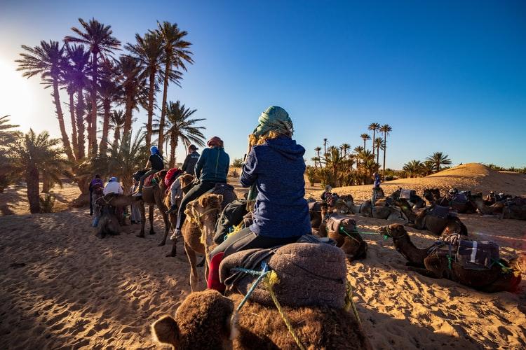 camel-sahara